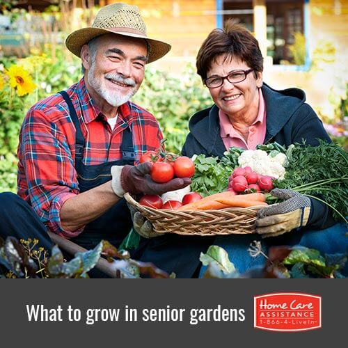 Fruit and Veggies to Grow in Your Senior Loved One's Garden in The Grand Strand, SC