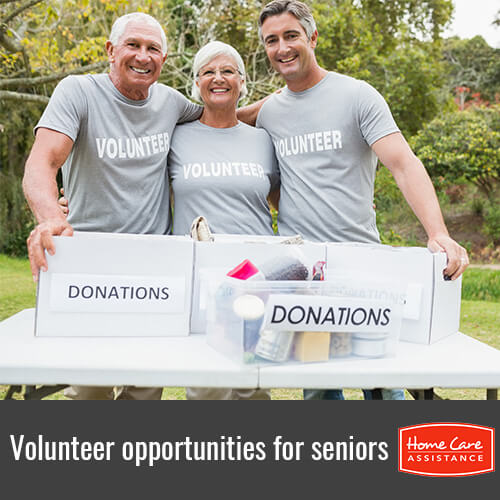 4 Opportunities Where Seniors Can Volunteer in Grand Strand, SC